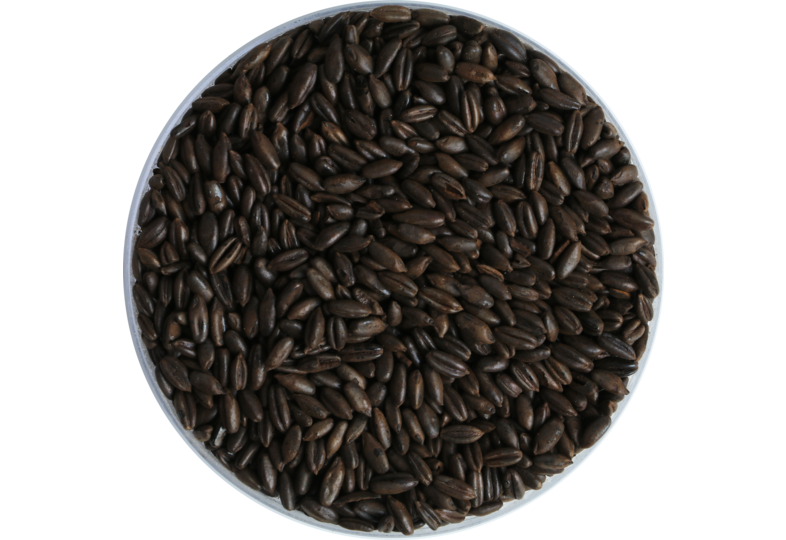 Mout - Malt Weyermann de seigle chocolat 650 EBC