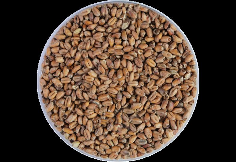 Malts - Weyermann Dark Wheat Malt 15-20 EBC