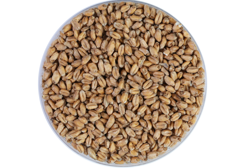 Malts - Weyermann Oak-smoked Wheat Malt 4-6 EBC Weyermann