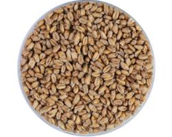 Malts - White Wheat Malt 4.5 EBC