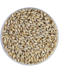 Malts - Organic Pale Ale Malt 8 EBC