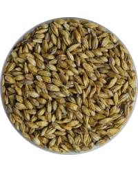 Mout - Malt de brouwerij Cara Pils