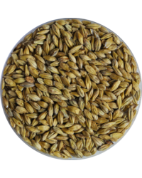 Malts - Acid Malt 9.5 EBC