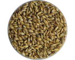 Malts de brasserie - Malt Acide biologique 9,5 EBC